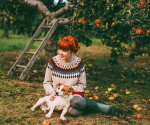apples, autumn, and dog image