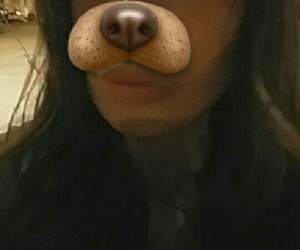dog, eyebrow, and lashes image