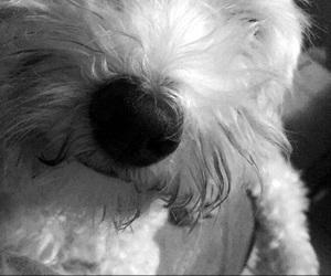 dog, dogs, and princess image