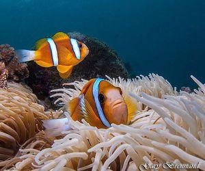 beautiful, fish, and ocean image