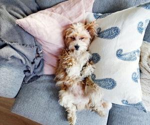 animal, dog, and sleepy image
