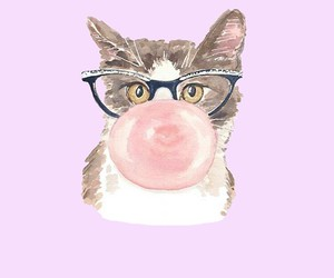 cat, wallpaper, and gato image