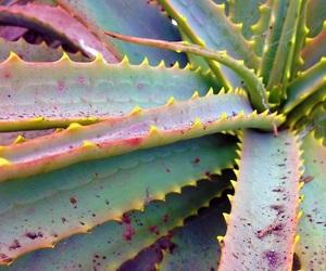 blue, cactus, and fruit image
