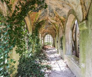 corridor, nature, and plants image