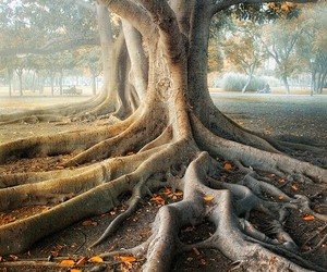 photography and tree image