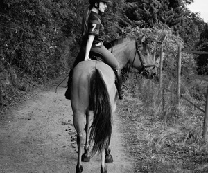 horse, horseriding, and horselove image