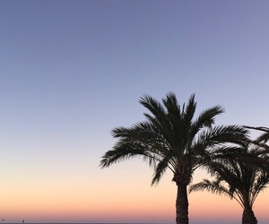 palm trees, spain, and summer image