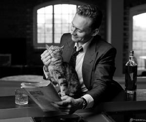 tom hiddleston and cat image
