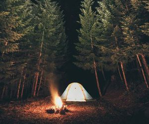 camping, forest, and fire image