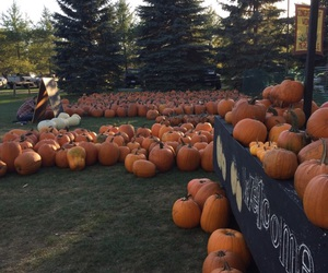 aesthetic, carve, and farm image