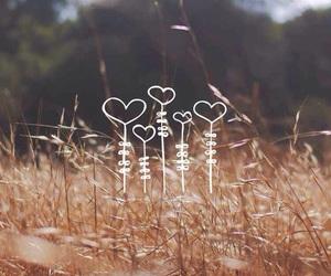 love heart nature wheat image