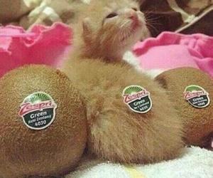 cat, kitten, and kiwi image
