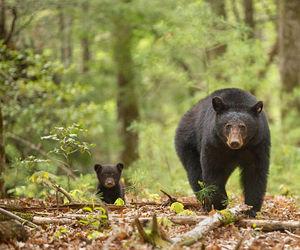 wild life, animals, and big image
