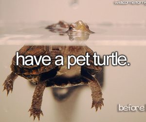 before i die, turtle, and quote image