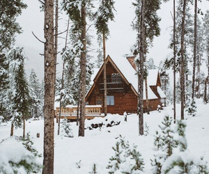 forest, house, and winter image