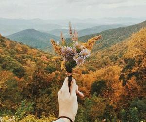 amazing, nature, and autumn image
