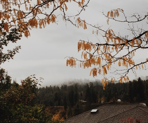 autumn, chill, and cold image