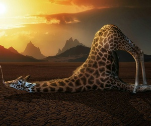 amazing, funny, and giraffe image