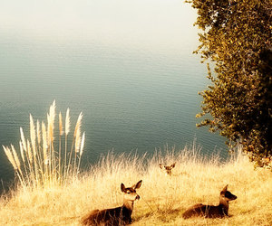 deer, etsy, and fawn image