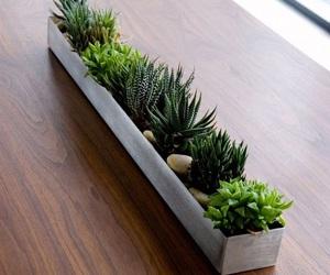 green, plants, and green thumb image