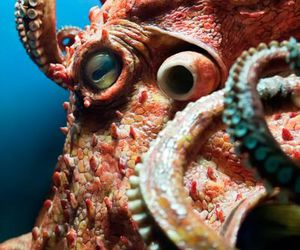 animals and octopus image