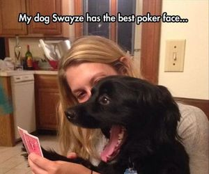 dog, funny, and poker face image