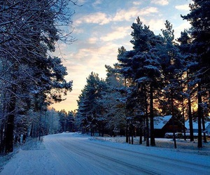 enjoy, snow, and forest image