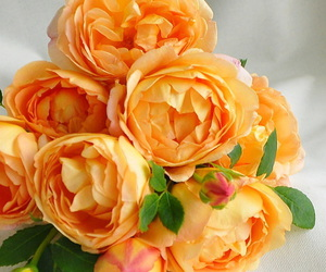 beautiful, flores, and cute image