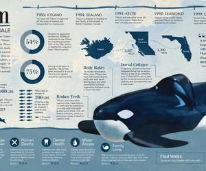 killer whale, orca, and sad image