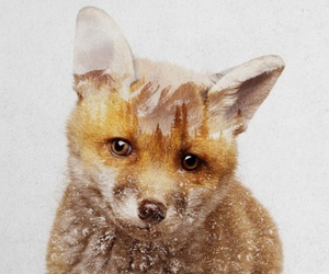 fox, draw, and drawing image