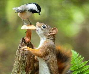 squirrel, bird, and animals image
