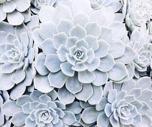 blue, flowers, and plants image