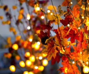 autumn, fall, and light image