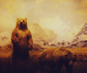 bear, grizzly, and holga image
