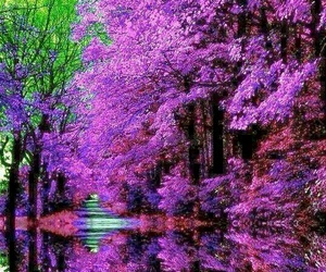 nature, purple, and tree image