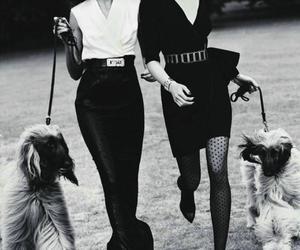 fashion, dog, and black and white image