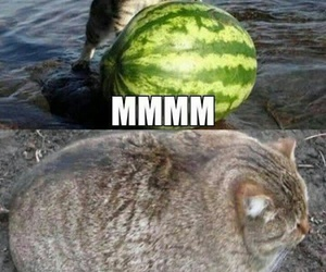 cat, lol, and water melon image
