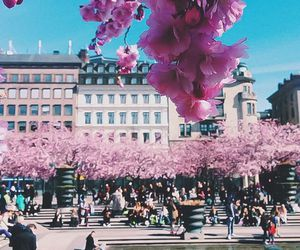 city, flowers, and pink image