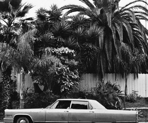 palms and tumblr image