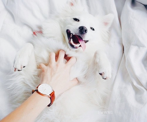 dog, animal, and happy image
