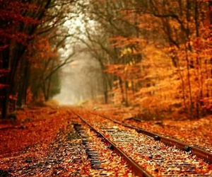 autumn, landscapes, and nature image