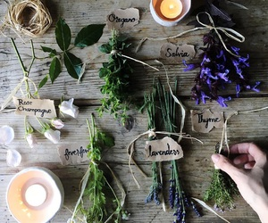 candle, herbs, and nature image