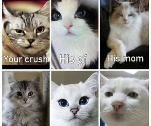 funny, cat, and crush image