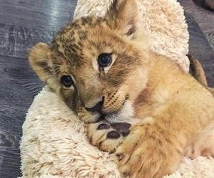 amazing, baby, and cuteness image