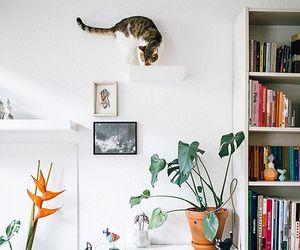 books, cat, and design image
