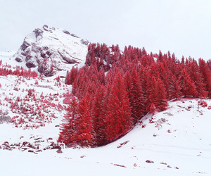 red, nature, and snow image