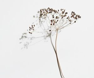 art, seeds, and botanical image