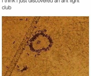 ant, circle, and club image