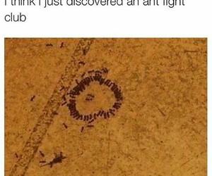ant, circle, and club image