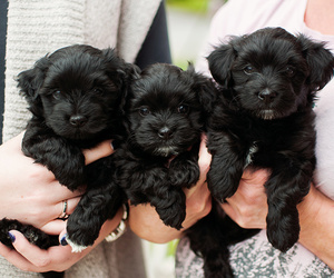 autumn, photo, and puppies image